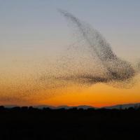 Migration hivernale (Mixcloud->Internet Archive)